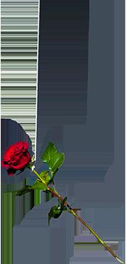 En svävande ros där man ser att den hänger i ett snöre.